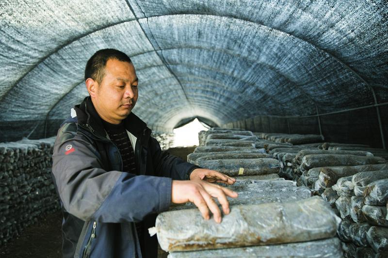 """略阳县三个农民的农业供给侧""""改革"""""""